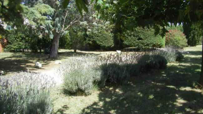 Jardin côté entrée
